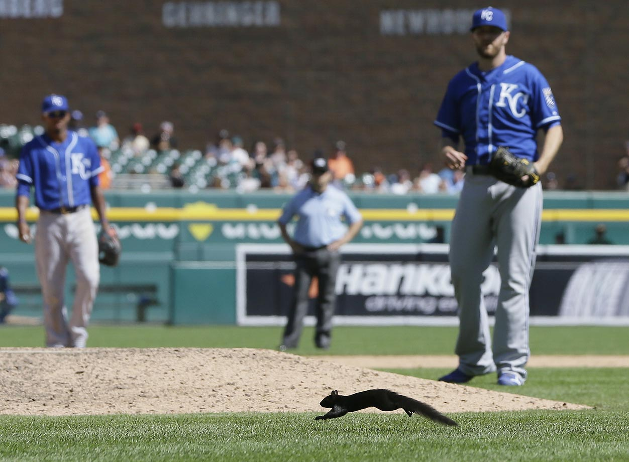 Ryan Madson of the Kansas City Royals watches a squirrel run across the field in Detroit.
