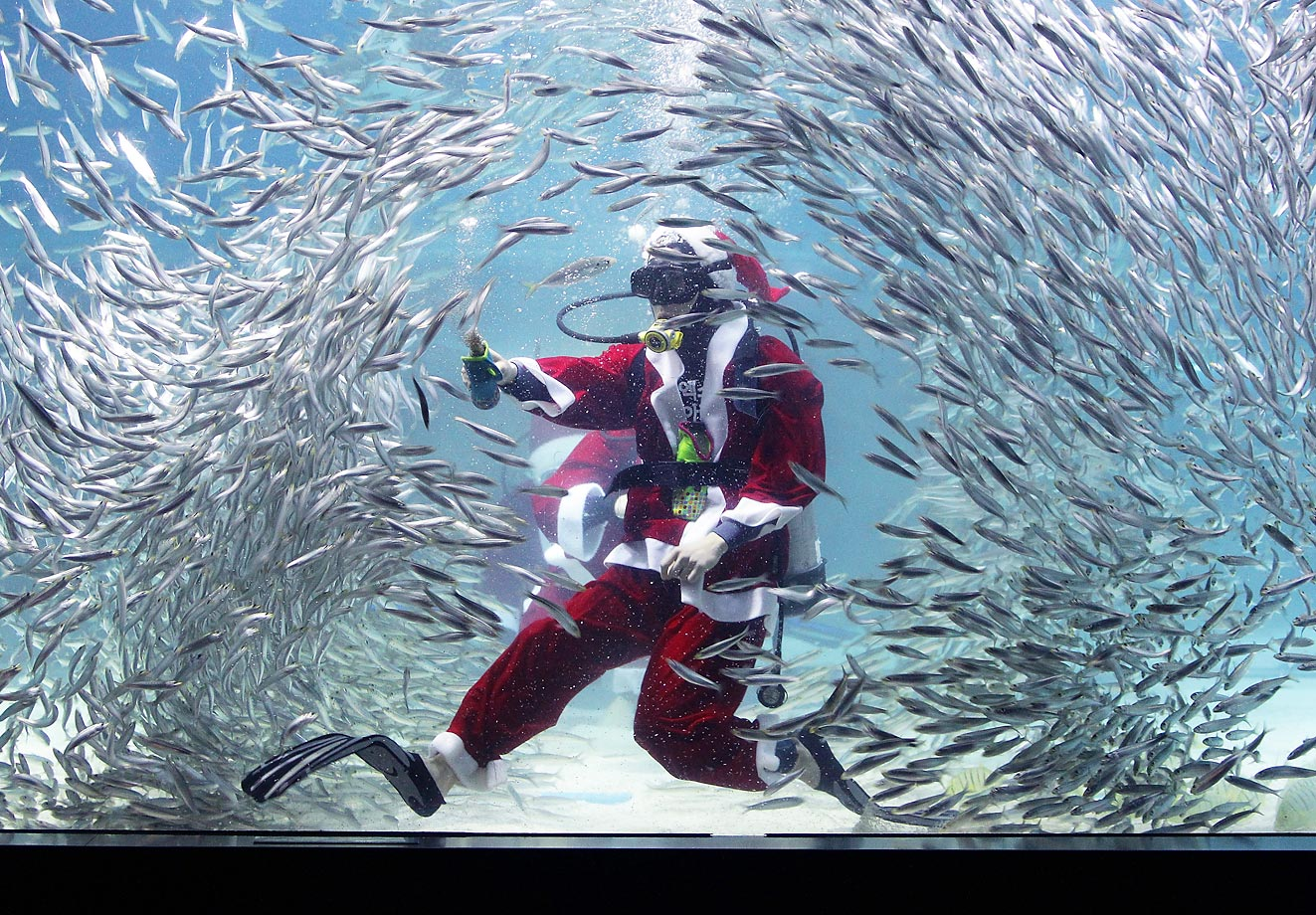 Santa Claus scuba dives with sardines at the Coex Aquarium in Seoul, South Korea.