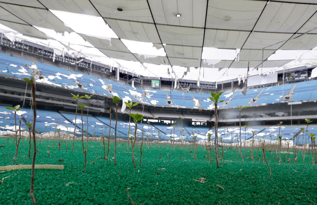 Plants grow through the turf.