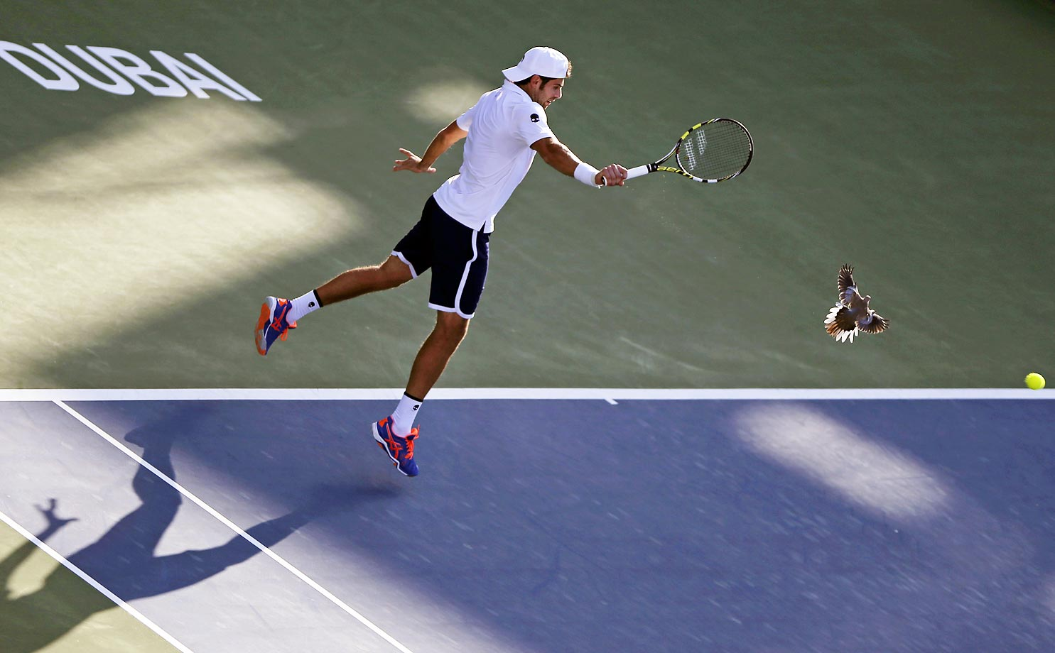 Simone Bolelli returns the ball (and pigeon?) to Tomas Berdych during the Dubai Duty Free Tennis Championships.
