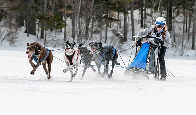 Картинки по запросу sled dog racing