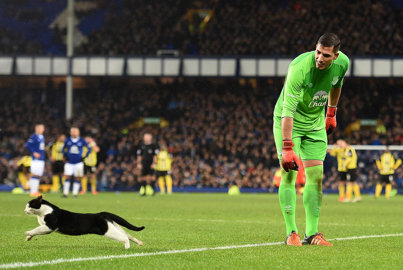 Joel Robles of Everton attempts to catch a cat during the FA Cup third-round football match between Everton and Dagenham & Redbridge in Liverpool.