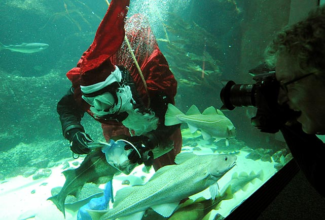 This just in: Santa has been found sleeping with the fishes at an aquarium in northern Germany. And on that sad note, we bid you farewell.