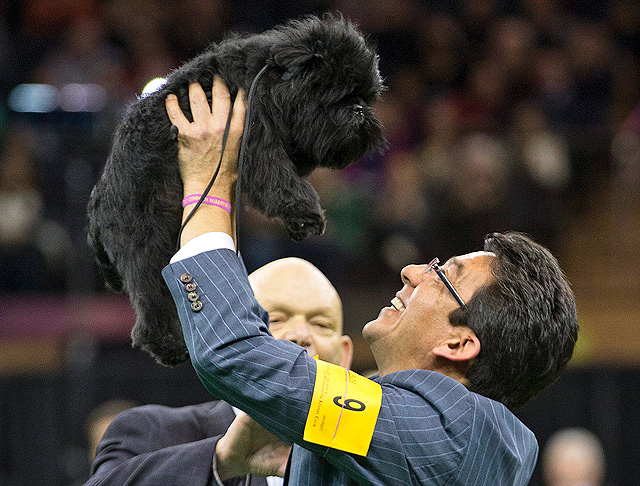Banana Joe, an affenpinscher, won Best in Show at the 137th Westminster Dog Show, featuring 2,721 entries this year.