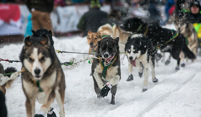 The mush dogs bolted out of the gates for the 41st Iditarod on Sunday afternoon in Alaska.