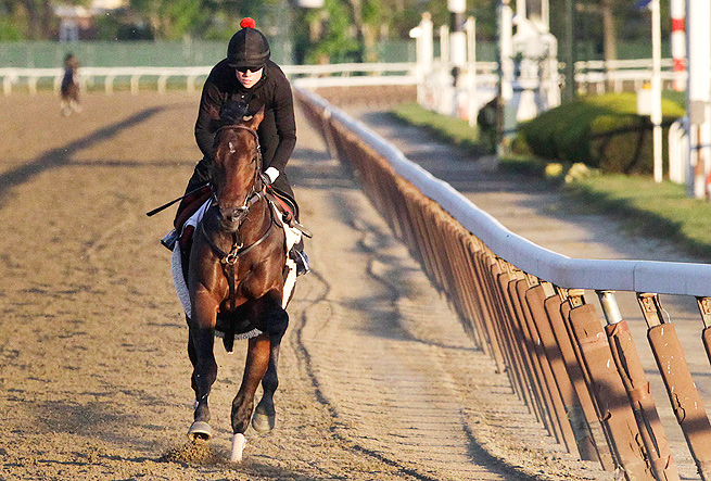 Orb completes his final workout in Belmont Park before leaving for Baltimore for the 138th Preakness.