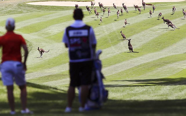 Karrie Webb of Australia waits for the kangaroos to clear the fairway in Canberra, Australia.