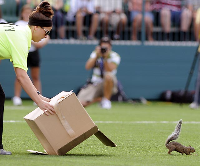 A worker tries to trap a squirrel during the WPS championship soccer game between the Western New York Flash and the Philadelphia Independence in Rochester, N.Y.,