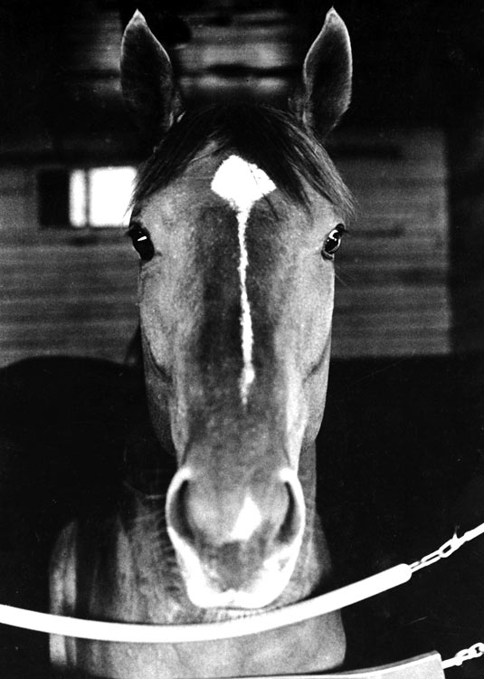 In 1999, the U.S. Postal Service issued a stamp featuring Secretariat.