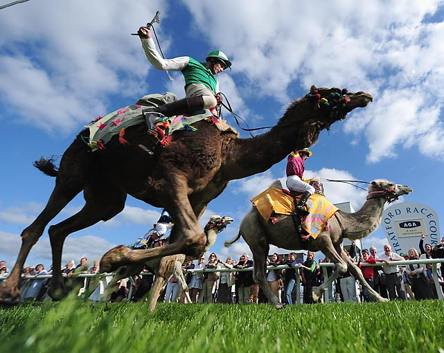 Hump day fare at Stratford-upon-Avon racecourse in, of all places, Stratford-upon-Avon, England.