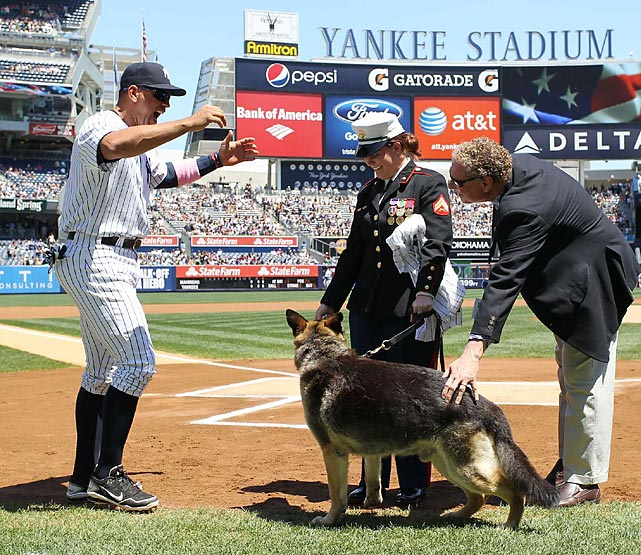 A-Rod approaches former Marine Cpl. And Purple Heart recipient Megan Leavey and combat dog Sgt. Rex during a pre-game ceremony in May 2012.