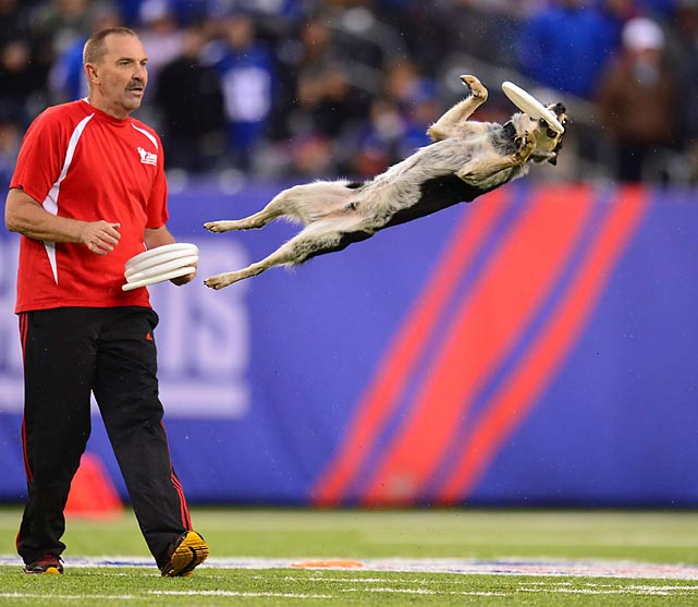 Dogs are not only man's best friend, but also they have some pretty good hops. Here's a look at some dogs in flight, starting with this display at a New York Giants game.