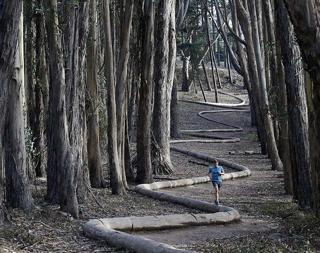 This way to the egress: Tim Green, of Sidney, Australia, navigates a sculpture by artist Andy Goldsworthy in a eucalyptus grove at San Francisco's Presidio.