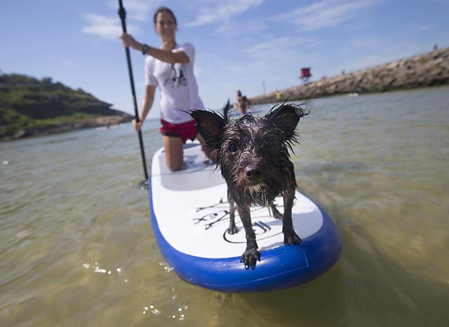 "You probably don't know Jack, so we're free to tell you that he's canine who created the ""dog paddle"" -- with help from his owner -- and here they are navigating the not quite bounding main off Barra de Tijuca beach in Rio de Janeiro. The pair were preparing for an upcoming canine-human pairs competition."