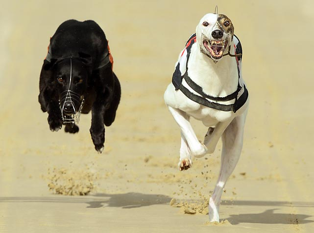 Rose's Rick (right) claims victory in the 11th race from Release The Ace at the Coral Brighton and Hove Greyhound Stadium in Brighton, England.
