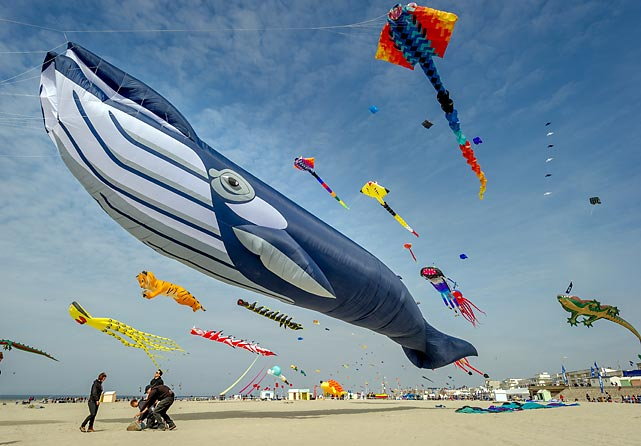 On the beach of the northern French resort town of Berck-sur-Mer during the 28th International flyfest, proof that the whale inspired the design of mankind's beloved blimps (Goodyear, MetLife) and Zeppelins (Graf, Led).