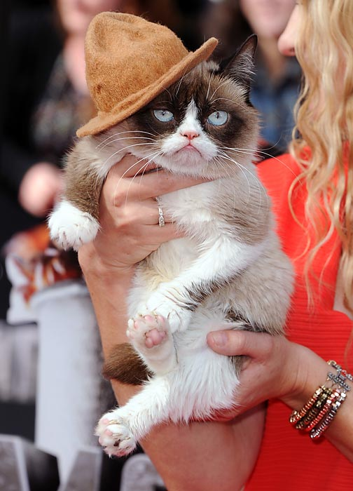 The famous feline was obviously thrilled to attend the 2014 MTV Movie Awards at Nokia Theatre in Los Angeles.