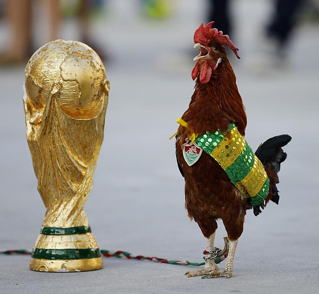Fowl call: Wearing the colors of Brazil's national team, the famed rooster, 11, crows about a replica of the World Cup trophy at Rio de Janeiro's Maracana Stadium. The wily bird is named after Fred, the Brazilian striker who ordinarily plies his trade for Fluminense. (That's the team's medallion around his namesake's neck.)