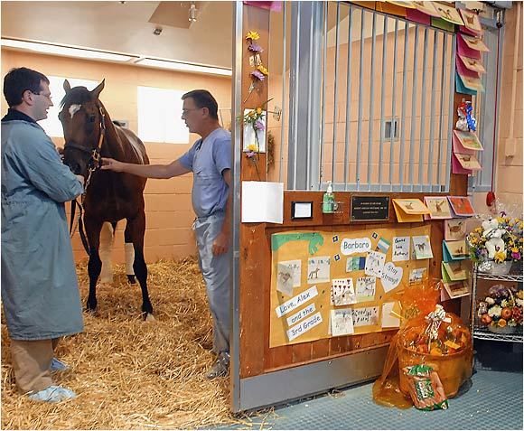 As well-wishers sent flowers and cards, Barbaro was eventually able to put weight on his right hind leg again. But the damage was already being done: Barbaro had begun to place weight on his left hind leg as a consequence of his injury, and a resultant infection rendered it laminitic.