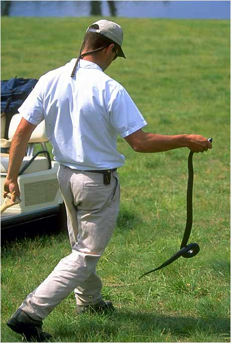 An official removes a snake from the course at the Congressional Country Club in Bethesda, Md.
