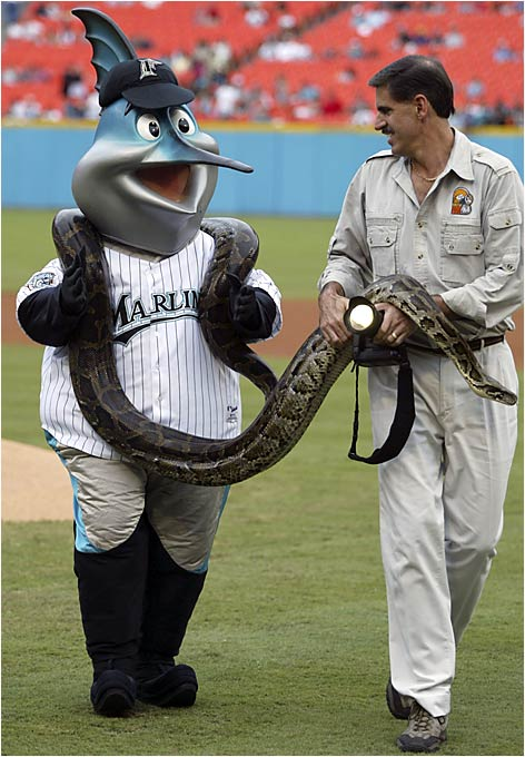 The Florida Marlins mascot is helped off the field by Ron Magill of the Miami Metro Zoo after Billy displayed a Burmese python before a game between the San Diego Padres and the Marlins in August 2003.
