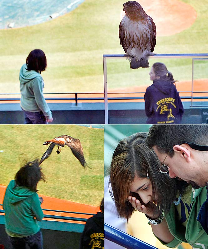 This 13-year-old student at Memorial Boulevard Middle School was attacked by a red-tailed hawk during a tour of Fenway Park on Thursday. The girl's name? Alexa Rodriguez. ALEXA RODRIGUEZ!