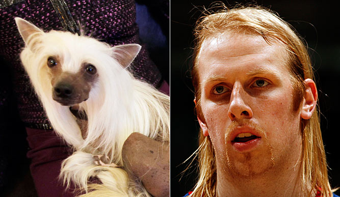 Chris Kaman and this Chinese Crested could easily have the same hair dresser.