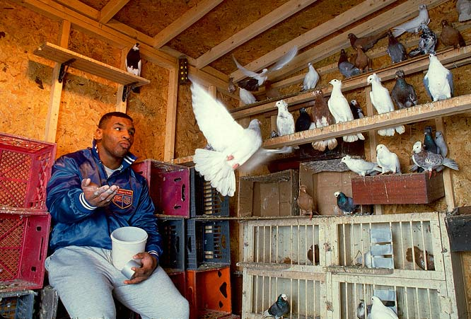 "Outside the ring, Tyson found solitude in breeding ""roller"" pigeons, which are known for flying miles overhead before taking massive dives. The former champ owned hundreds at the time and said they were the love of his love, next to his six children."