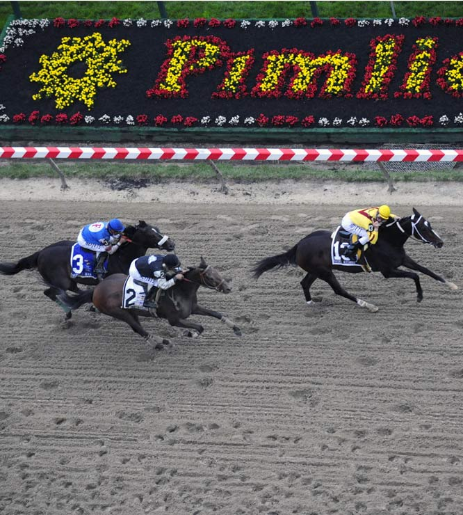 Just like the Derby, Mine That Bird rallied from a huge early deficit. But unlike the Derby, MTB had to settle for second place in the Preakness.
