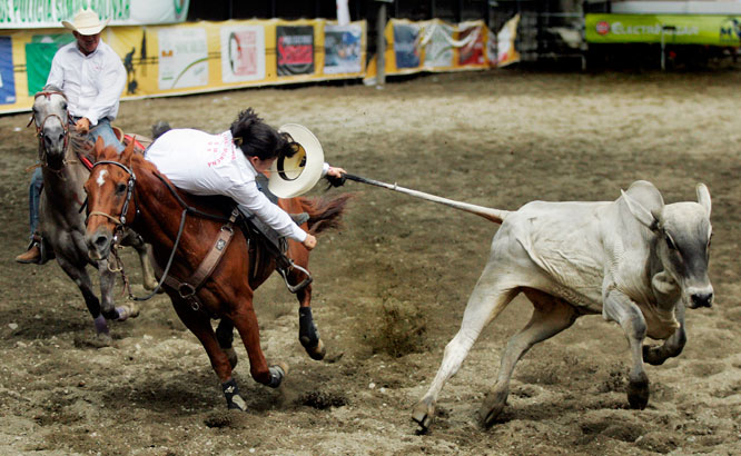 A woman pulls the tail of a steer in an attempt to knock him over in a Colombian-style rodeo known as coleo at a rodeo festival in Tulua, Colombia.