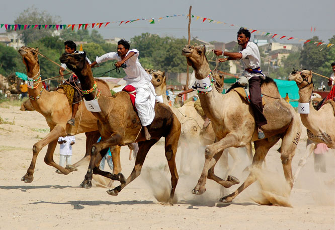 Camel riders participate in a race at Sidhpur, about 68 miles north of Ahmadabad, India, on Oct. 31.