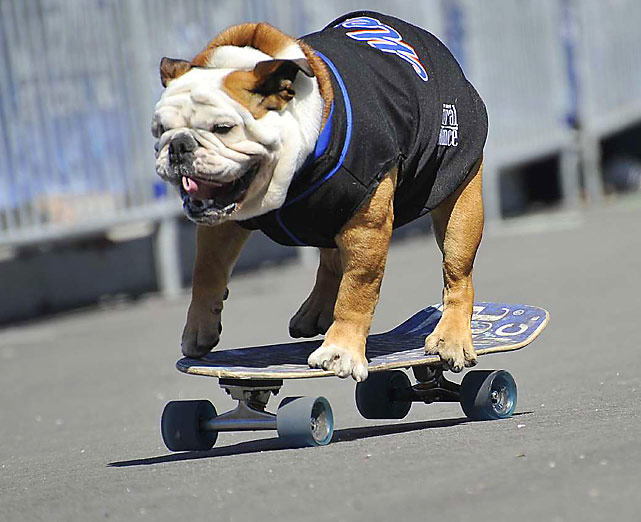 "Tillman, the worlds fastest skateboarding dog, attends ""Bark in the Park"" at New York's Citi Field on Saturday. The event, during which Mets fans can watch a game with their dogs, helps to support the North Shore Animal League America."