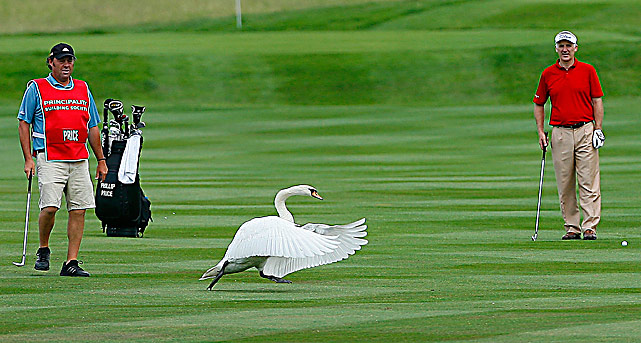 Welsh golfer Phillip Price waits for a swan to cross the fairway before playing his approach shot to the 12th green on June 6 during the final round of the Celtic Manor Wales Open in Newport, Wales.