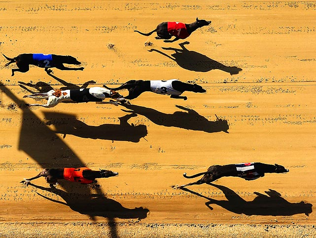 Canines race out of the gates at Romford Greyhound Stadium on March 24.