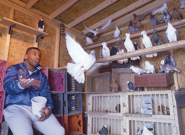 Pigeons have been a constant in Mike Tyson's life from his childhood. Now, in the new Animal Planet series  Taking On Tyson  (which premieres March 6 at 10 p.m. ET/PT), the former heavyweight champion will go beyond just raising the birds into the highly competitive world of pigeon racing.   Here's a look at Tyson's affinity for pigeons through the years.