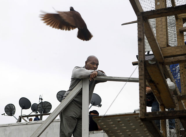 Tyson watches racing pigeons fly near a rooftop coop in Jersey City, N.J.