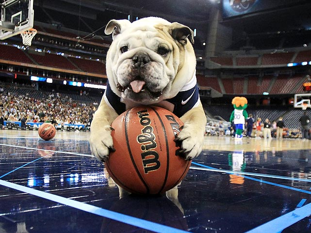 Butler mascot Blue II, the star of the team's second consecutive trip to the national championship game, seems to be examining the ball before the team's game against VCU.