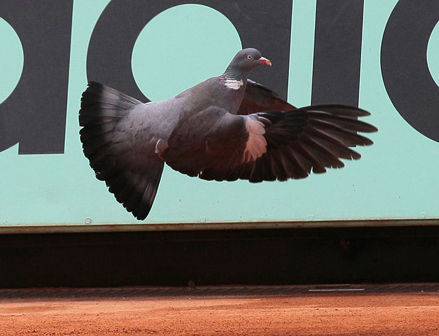 A pigeon flies above a court during Sunday's first day of the French Open.