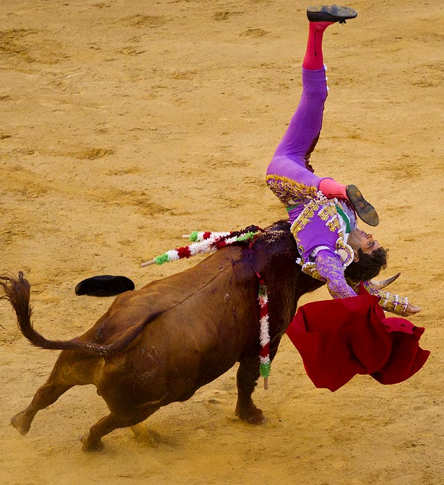 After a year of coming within inches of his life following a bull goring in Mexico, Spanish bullfighter Jose Tomas returned to action to be flipped by this El Pilar ranch fighting bull in Valencia, Spain, on July 23.
