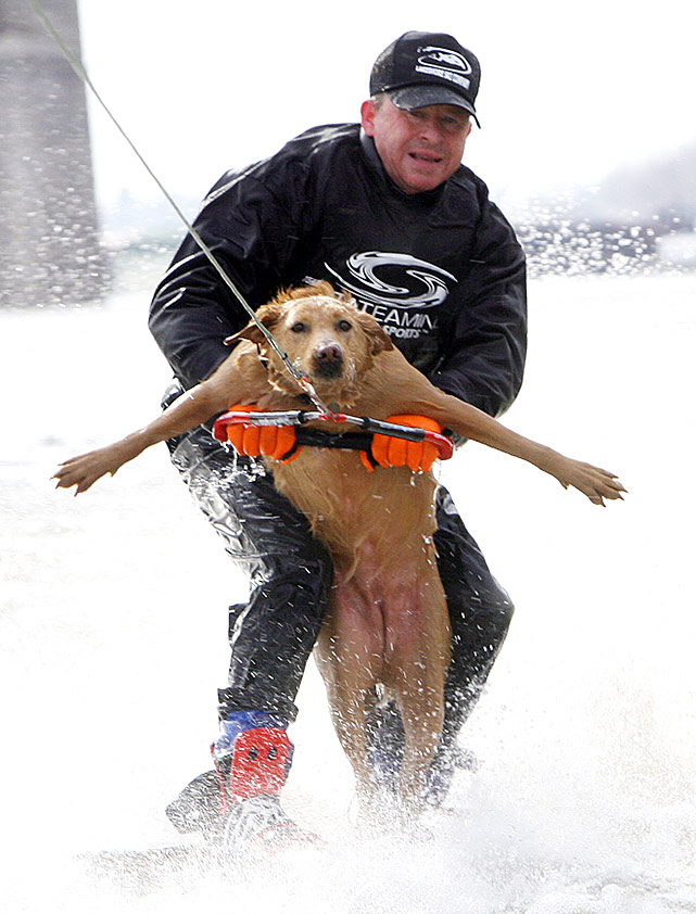 That dog is probably about as happy as he looks. Brown Sugar and his owner struggle to stay up on their ski as they water ski in 20 degree temperatures on the Mississippi River in St. Louis on New Year's Day. Why does he brave the cold? Good question.