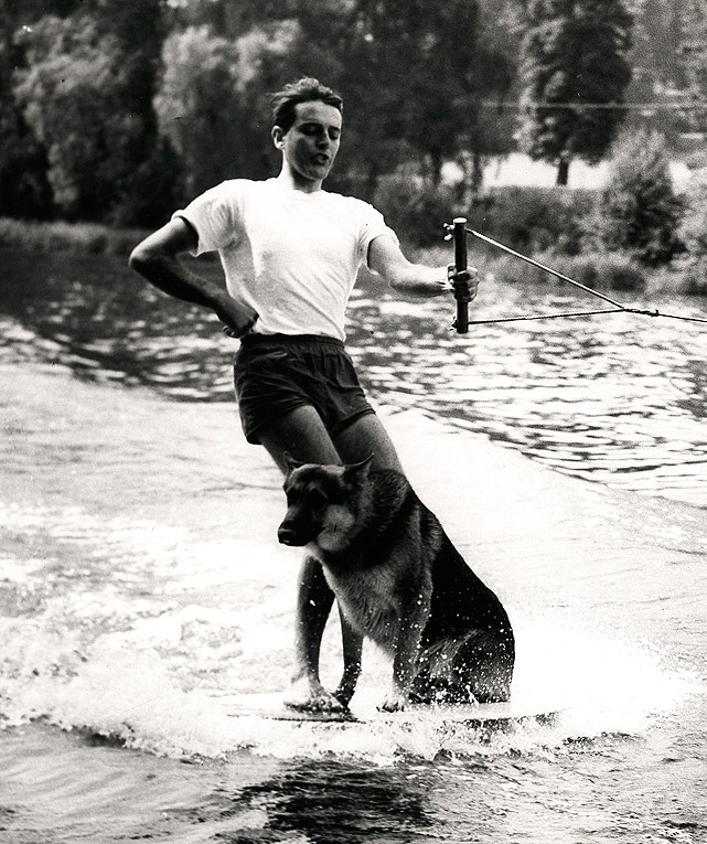 This German Shepherd was a fanatic for water sports, according to his owner. At three years old he was already an experienced water skier. I wonder if he still enjoys water skiing today (at an age upwards of 50 human years)?