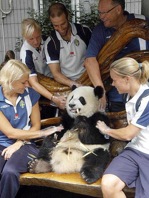The Swedish women's soccer team heard it was good luck to touch a panda before their appearance in the 2007 Women's World Cup in Shanghai.  Apparently they heard wrong, as the team went on to lose in group play.