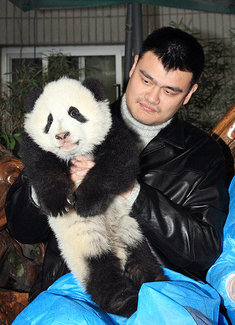 Now that he's retired, Yao can pursue his real dream job: panda masseuse.