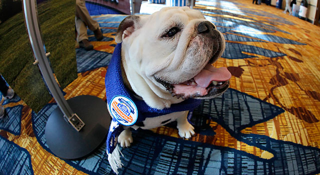 Butler mascot Blue II wears a Super Bowl scarf during a visit to the Super Bowl XLVI media center on Wednesday.