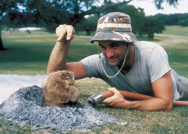 Since breaking onto the scene as the slightly off-kilter groundskeeper in  Caddyshack , Bill Murray has been a mainstay on the big screen. An avid sports fan, Murray has also popped up at Wrigley Stadium to support his hometown Cubs and is a fixture on the celebrity golf circuit. In honor of  Groundhog Day , one of Murray's biggest hits, here's a look at Bill Murray and sports