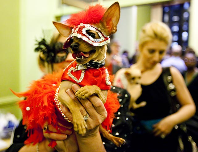 Dixie Bell, a nursing home volunteer dog, sports a Valentine's appropriate outfit at the Fashion Show.