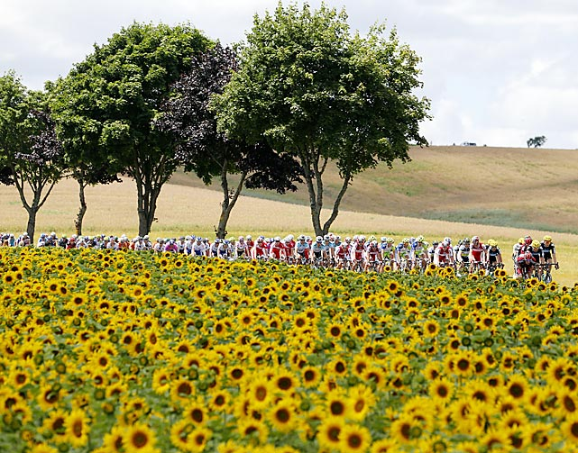 The pack of Tour de France cyclists pass by a field of sunflowers during the 123-mile seventh stage, starting in Tomblaine and finishing in La Planche des Belles Filles.  Englishman Christopher Froome won the stage with a time of 4:58:35.