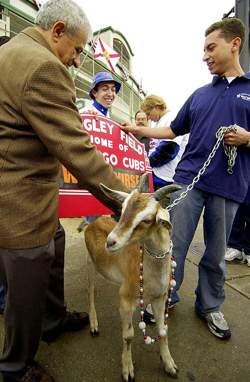 In an effort to promote his nearby Billy Goat Tavern, William Sianis buys tickets to Game 4 of the Fall Classic for himself and Murphy, his pet goat. The bar owner becomes so upset when Wrigley Field ushers his guest to leave, the Greek immigrant places a curse on the team preventing the Cubs from ever winning a World Series again.
