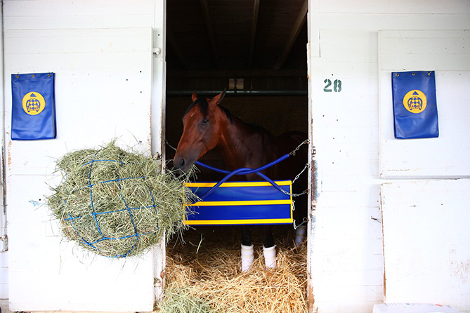 After a full morning, the Derby and Preakness champ nibbled a snack.