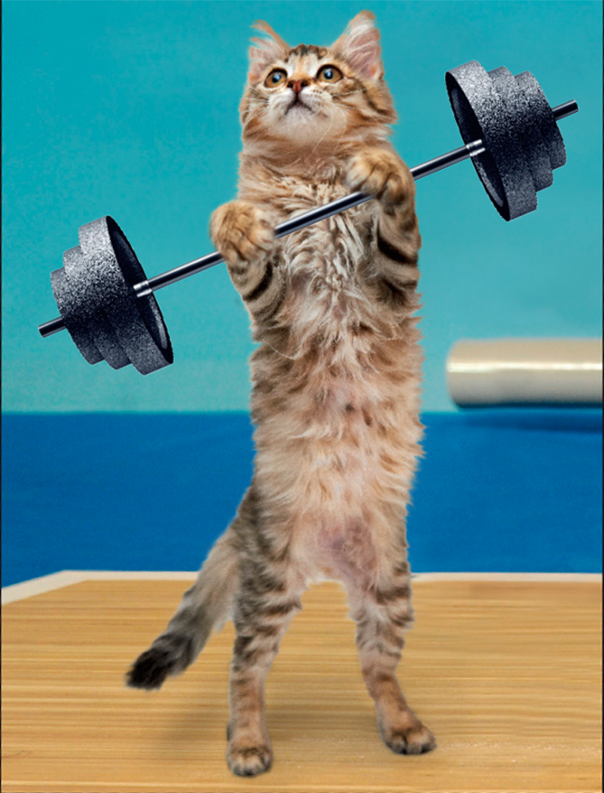 Anyone who's ever seen a cat go after a ball of string knows that kitties are very good at picking things up. One of the more controversial animal sports, feline weightlifting was rocked by a steroids scandal at the world championship in 2005, which explains why you never see it on TV anymore.